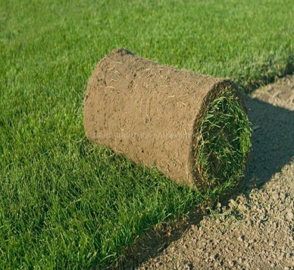 Рулонный газон - укладка рулонного газона
