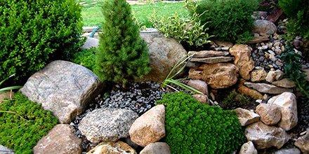 Растения для альпийской горки - студия Ландшафтный дизайн РФ