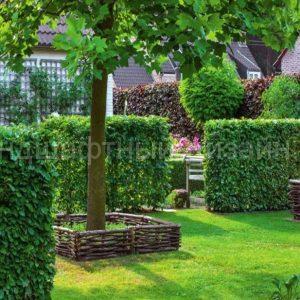 Живые изгороди - Студия ландшафтного дизайна