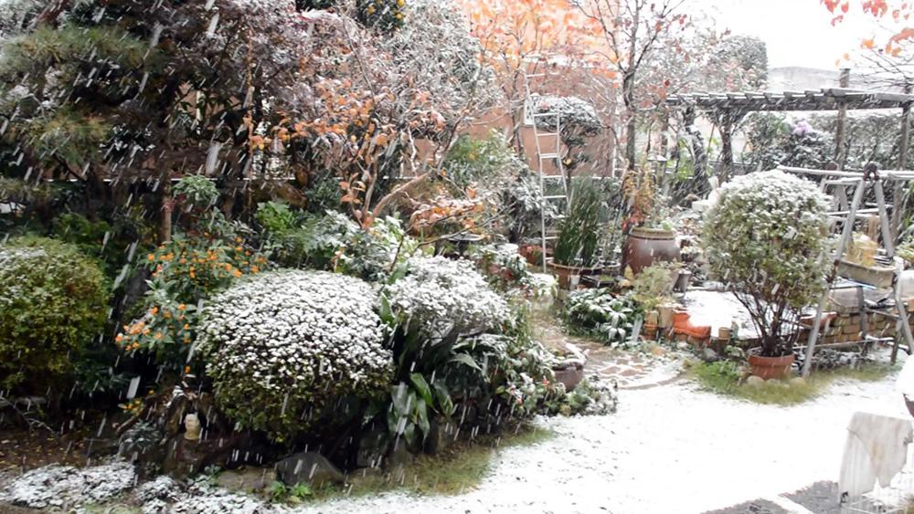 Уход за садом в ноябре - Уход за садом осенью