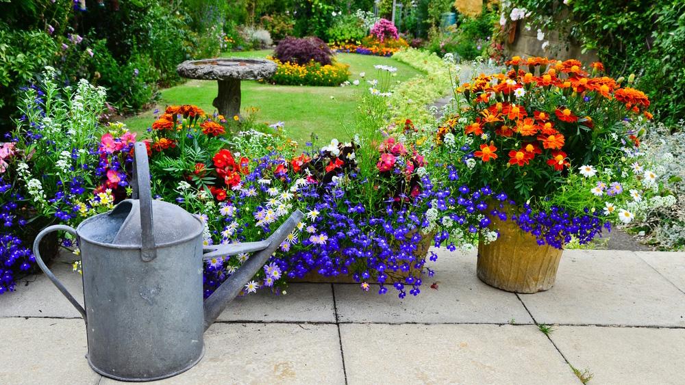 Уход за садом в сентябре - Уход за садом осенью